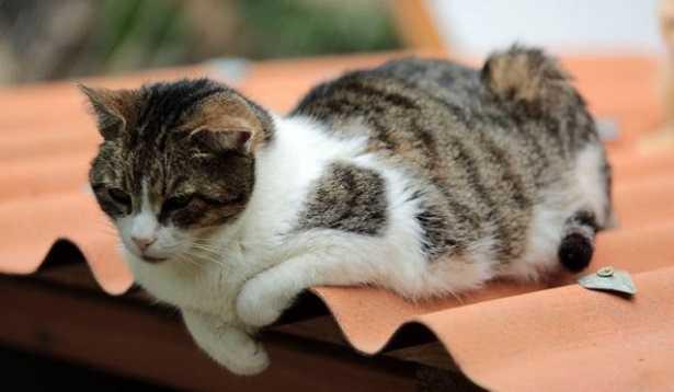 Antidolorifici per gatti