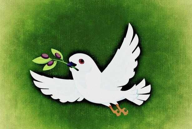 Colomba della pace simbolo della pace