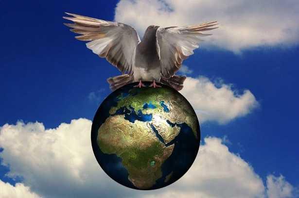Colomba Della Pace: Significato, Simbolo E Disegni