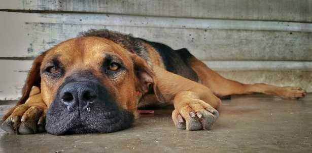 Flatulenze del cane