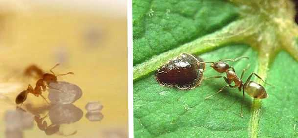 formiche sulle piante
