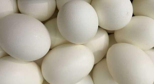Incubazione delle uova