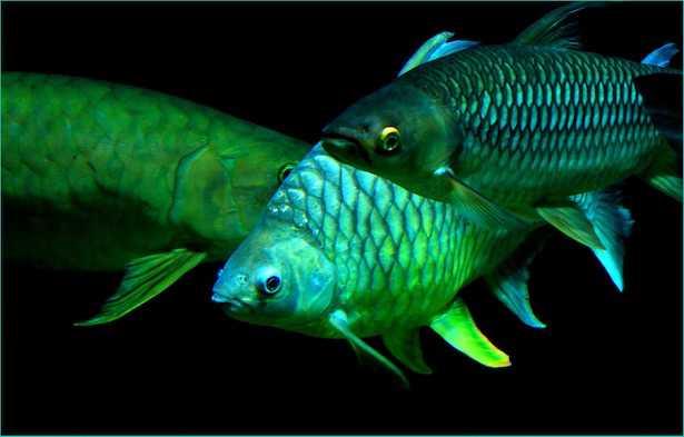 pesca subacquea normativa regolamento sanzioni