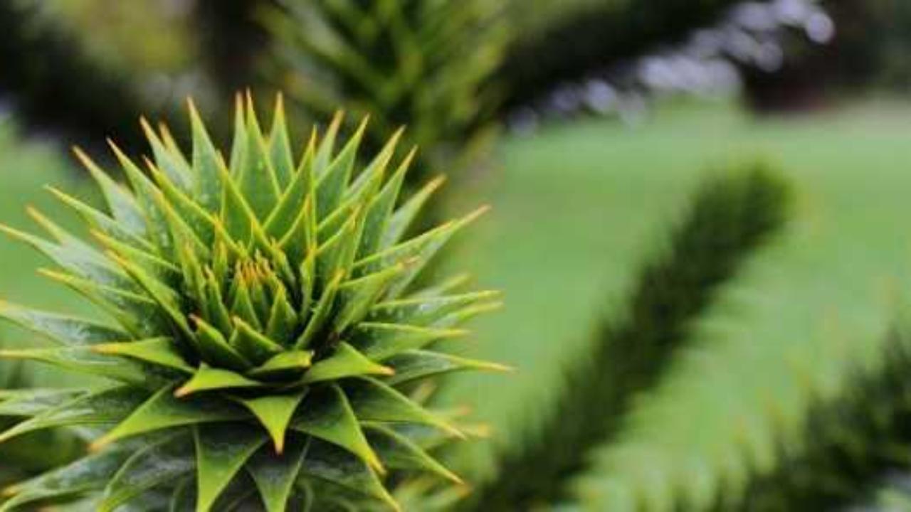Aloe In Giardino come realizzare un giardino secco - idee green