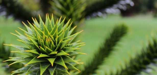 Alberi sempreverdi da giardino idee green - Alberi sempreverdi da giardino ...