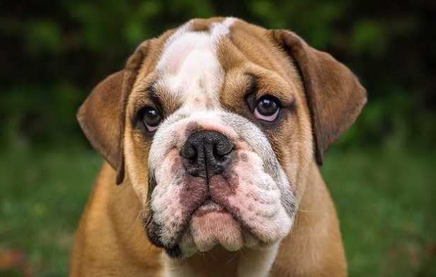 Cani più costosi