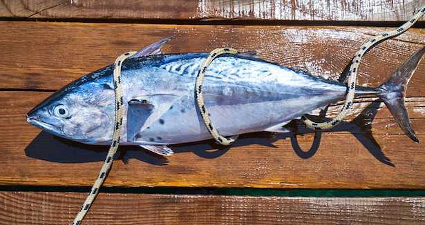 Come cucinare il tonno fresco