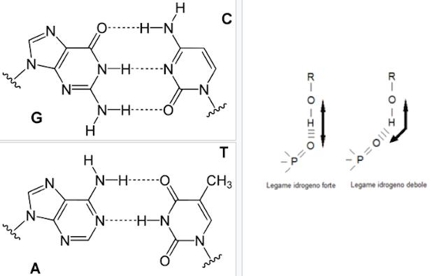 Legame idrogeno