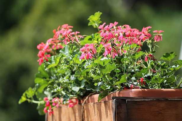 Ortensie Sul Balcone : Quali piante coltivare sul balcone idee green