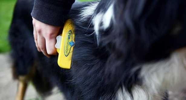 Shampoo per cani: quale scegliere