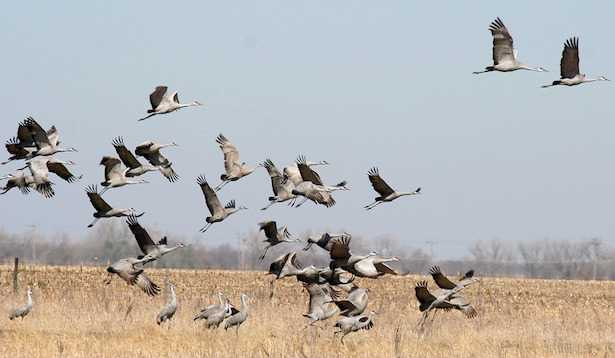 Uccelli migratori in Italia