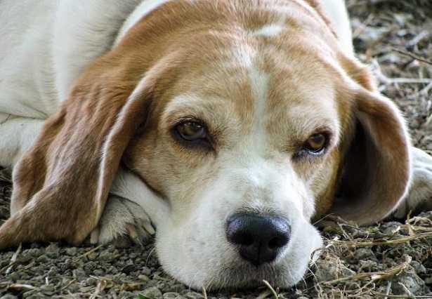 Carrellini per cani
