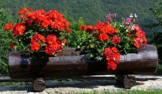 Fiori rossi: classificazione ed elenco