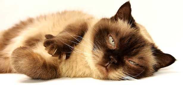 Perché i gatti fanno la pasta