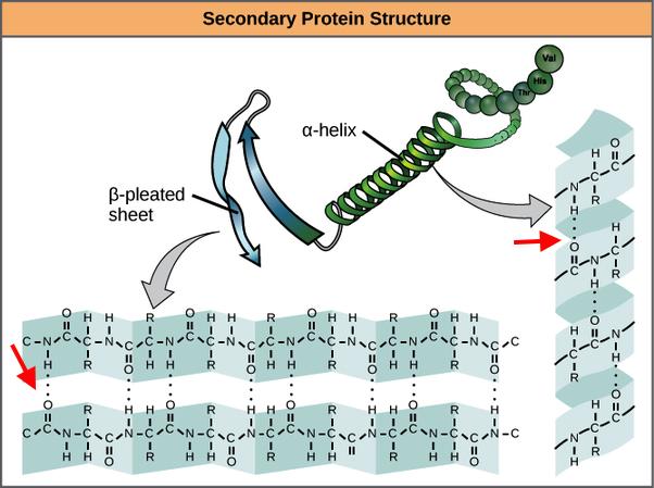 legame idrogeno alfa elica foglietto beta