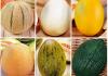 seminare il melone