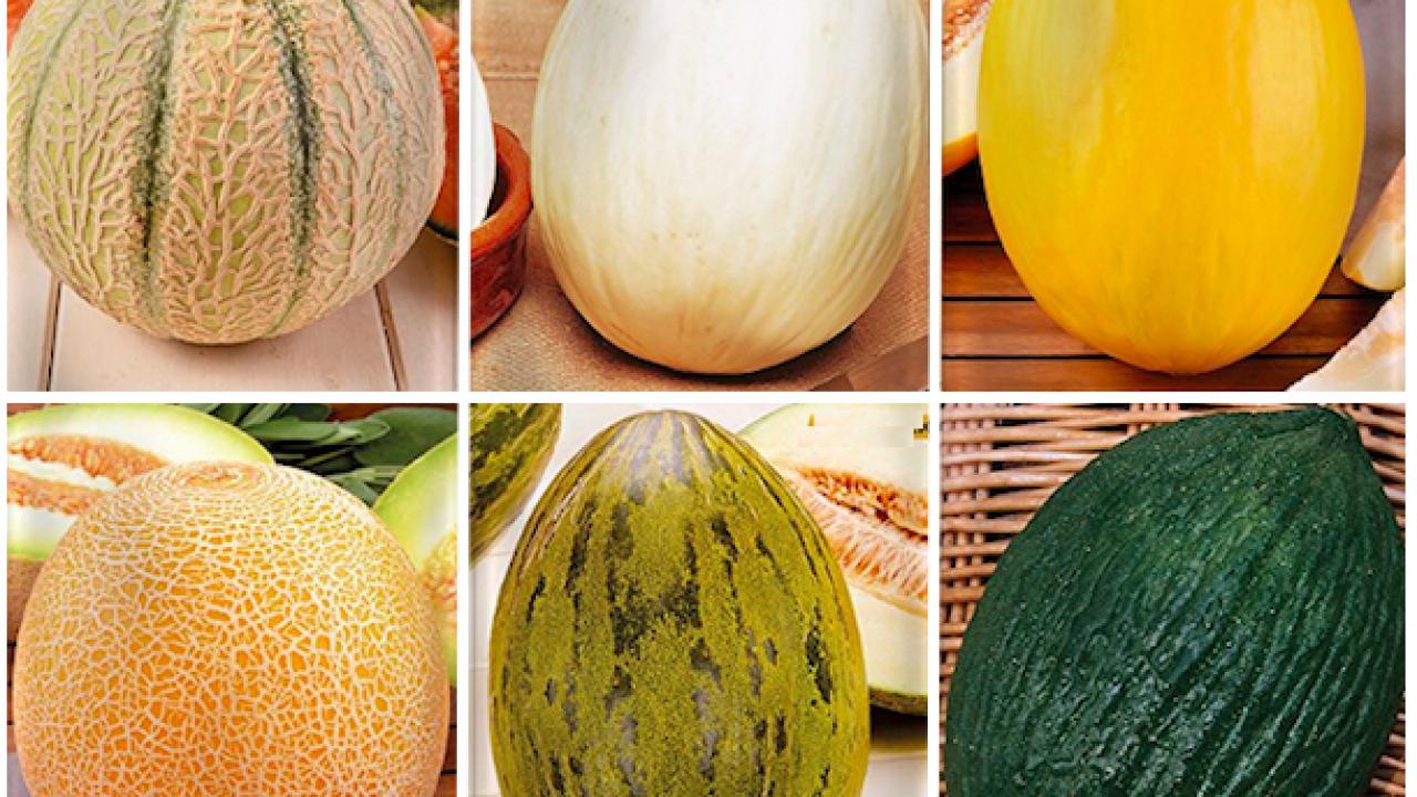Come Seminare Il Melone Idee Green