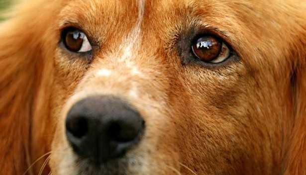 Vaccino eptavalente cane effetti collaterali