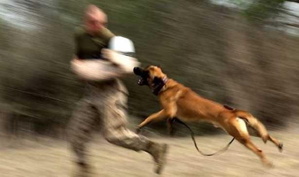 Educazione del cane: non abbaiare