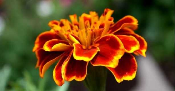 Poesie sui fiori famose