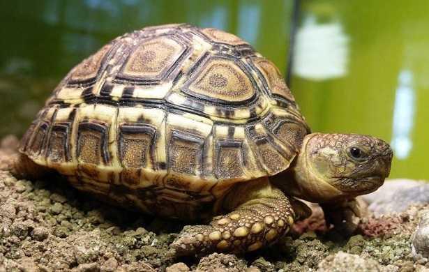 Quando vanno in letargo le tartarughe di terra