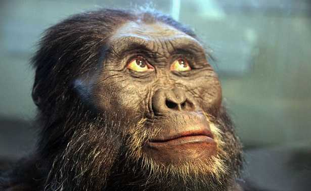 Australopiteco africano