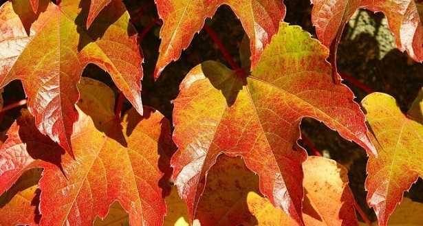 Frasi sulle piante in autunno