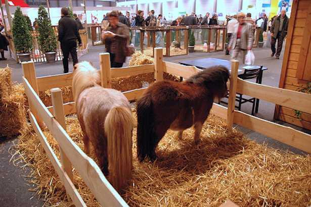 pony cavalli