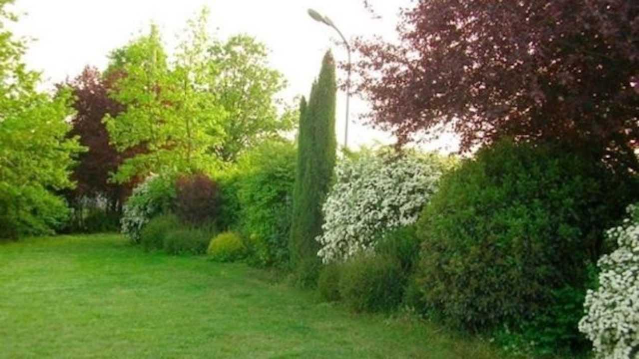 Siepi Miste Da Giardino siepe mista, consigli utili - idee green