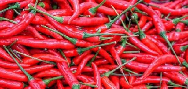 Semina del peperoncino