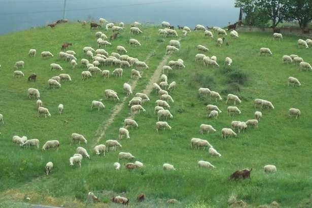 agricoltura estensiva intensiva