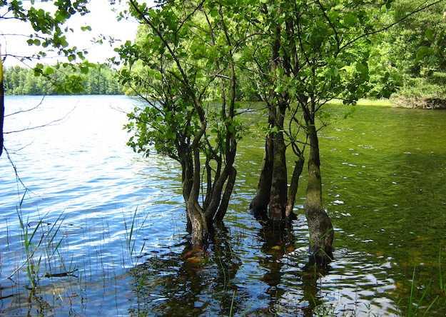 come riconoscere gli alberi