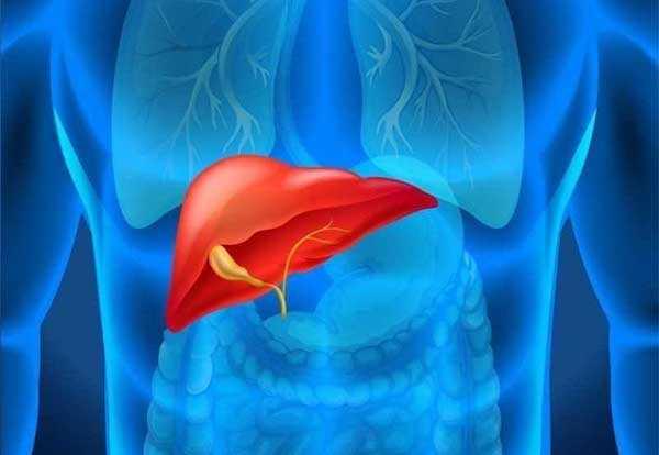 esami per il fegato
