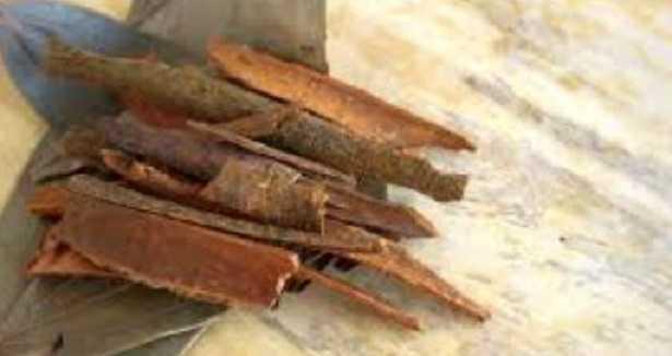 Albero della cannella