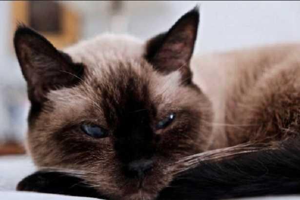 Demenza senile nel cane e demenza senile nel gatto