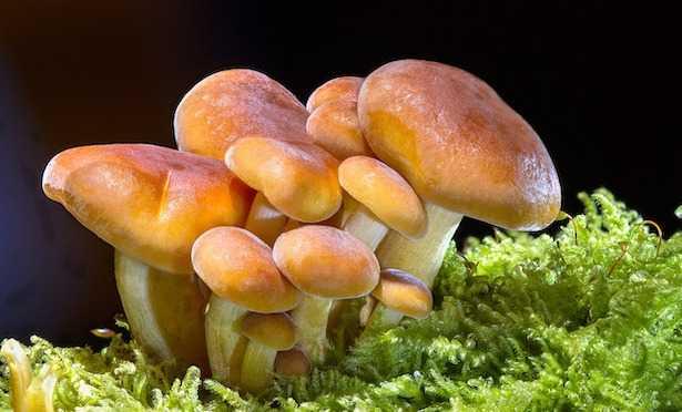 Funghi primaverili