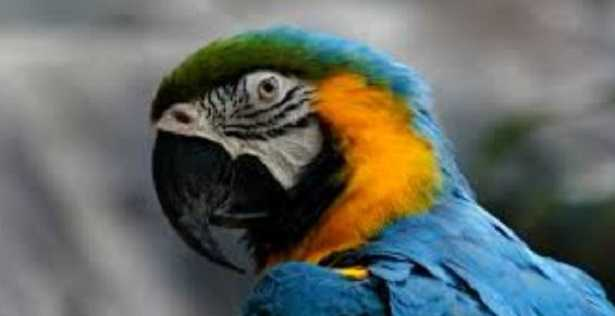 Nomi per uccelli
