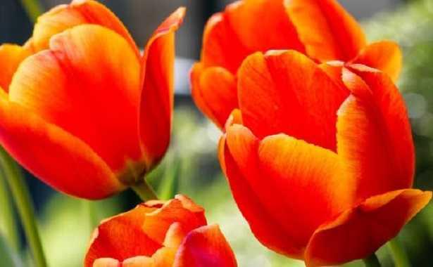 fiori primaverili profumati