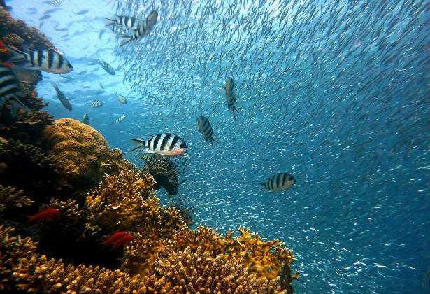 Ondate di caldo e biodiversità oceanica