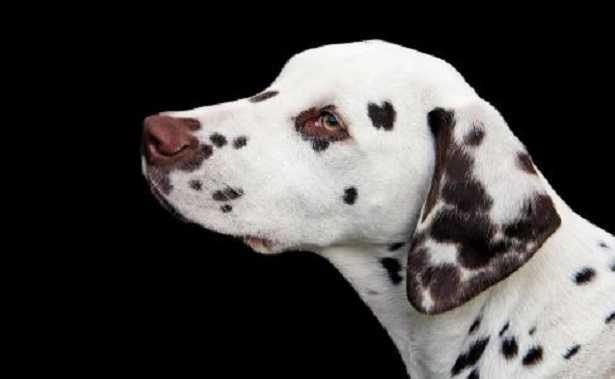 Nomi cani della Carica dei 101