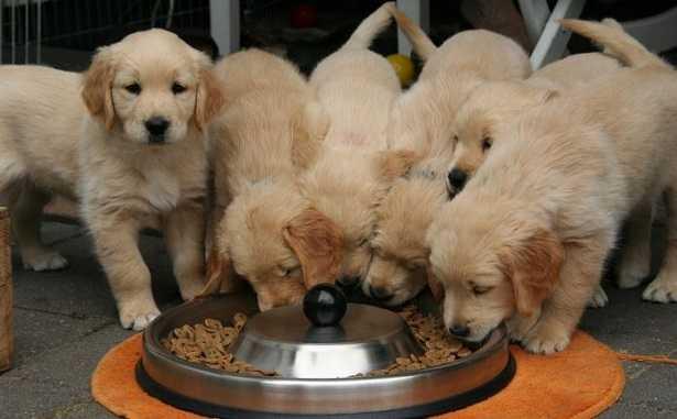 Tabella dosi di cibo per cani