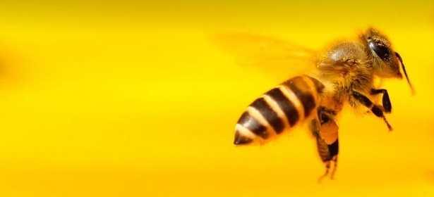 Come sono organizzate le api