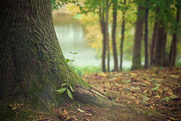 funzioni delle foreste