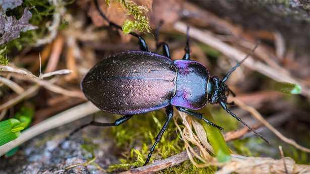 Maggiolino, insetto pericoloso: prevenzione e come combatter