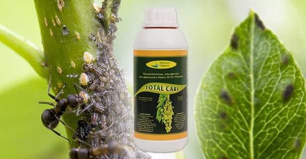 olio neem idrosolubile agricoltura