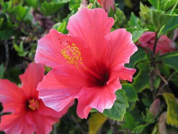 piante acidofile cure