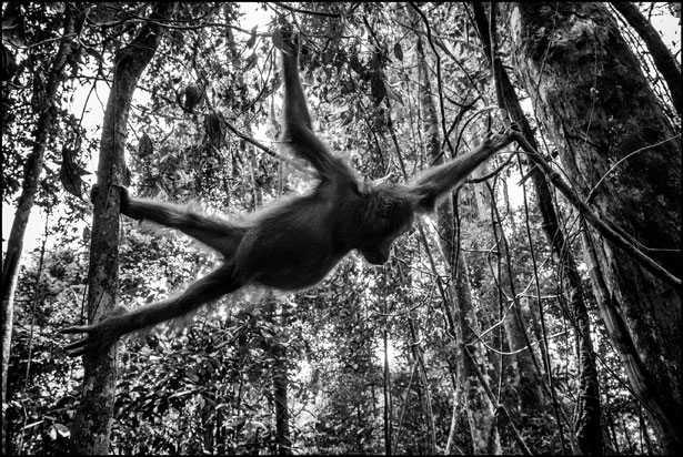scimmia foresta
