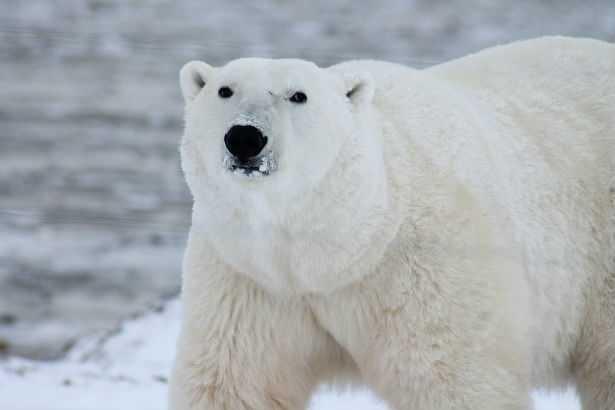 Un milione di specie del Pianeta sono a rischio estinzione