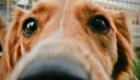 Come calmare un cane ansioso