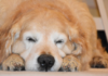 Come educare il cane a dormire nella cuccia